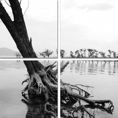 Vícedílný obraz Kořeny stromu v řece